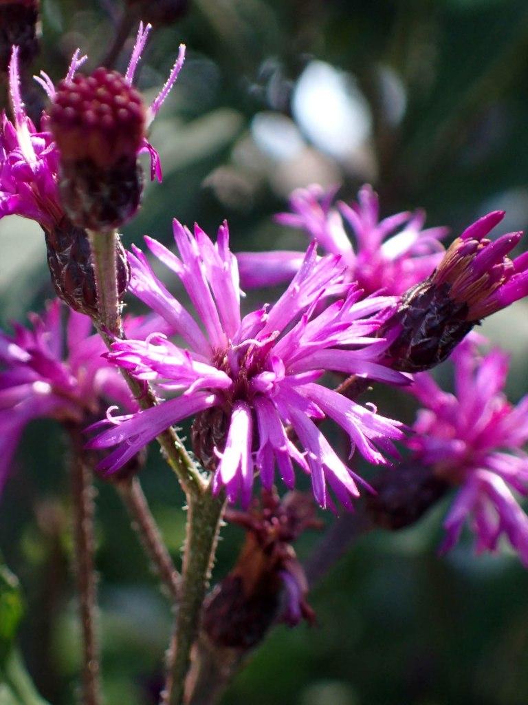 Bright purple and magenta flowers