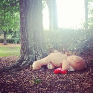 Abandoned Teddy