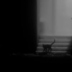 Headlights: Black Cat