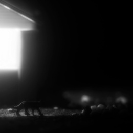 Headlights: Animal