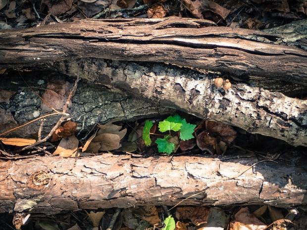 jacksonville-arboretum-macros_30593751666_o