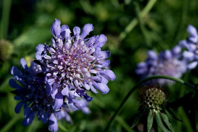 flower-tent-blue-violet
