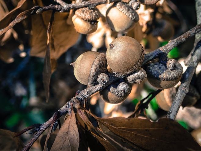 jax-arboretum-copper