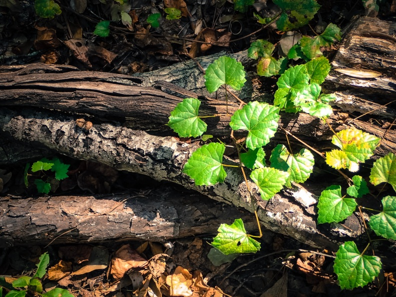 jax-arboretum-electric-lime