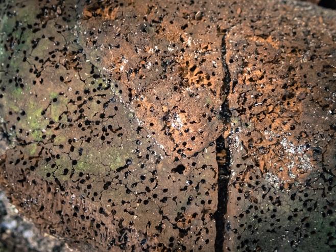 jax-arboretum-leaf-brown