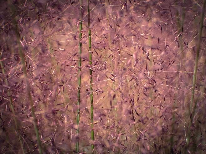jax-arboretum-leaf-fuchsia