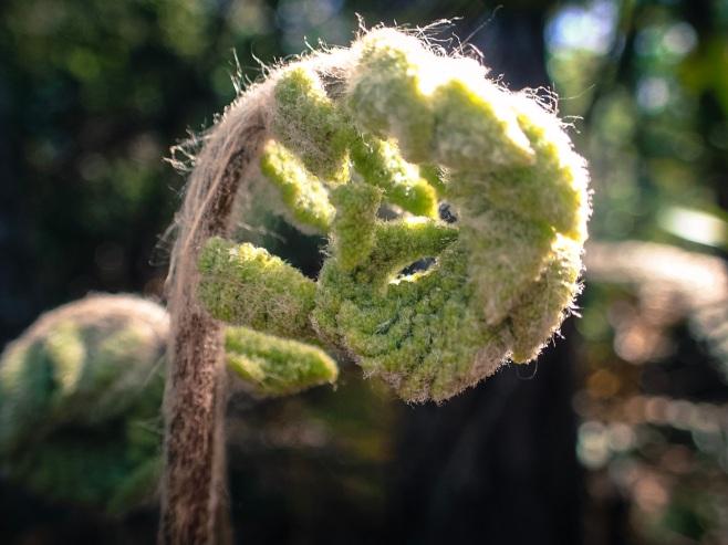jax-arboretum-leaf-fuzzy-wuzzy-brown