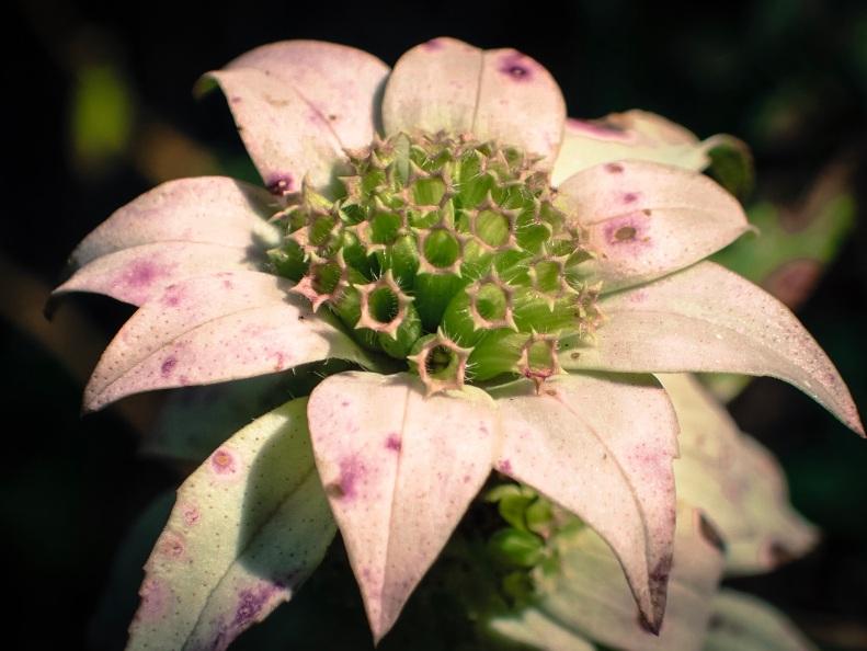 jax-arboretum-leaf-melon