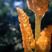 jax-arboretum-leaf-neon-carrot