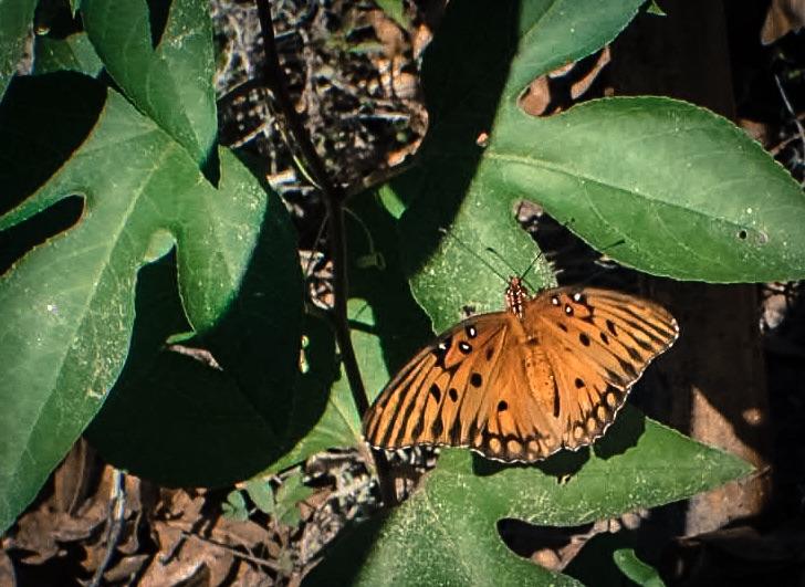 jax-arboretum-leaf-orange