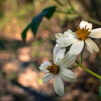 jax-arboretum-leaf-sunglow
