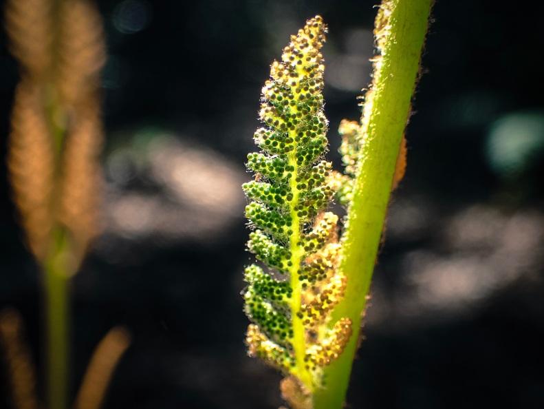 jax-arboretum-leaf-yellow-orange