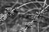 arboretum-10