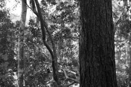 arboretum-11