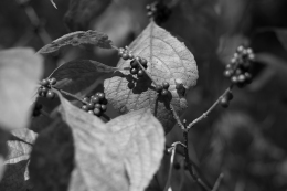 arboretum-12