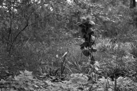 arboretum-17