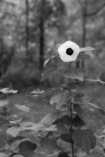 arboretum-18
