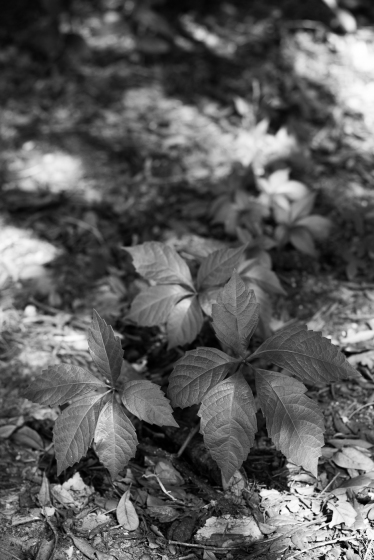 arboretum-19