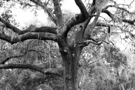 arboretum-20