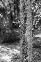 arboretum-22