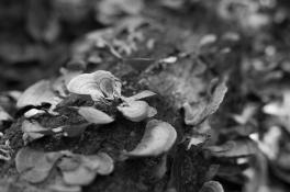 arboretum-27