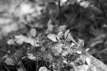 arboretum-29