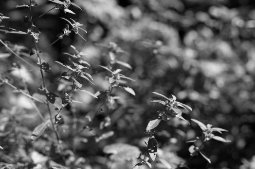 arboretum-3