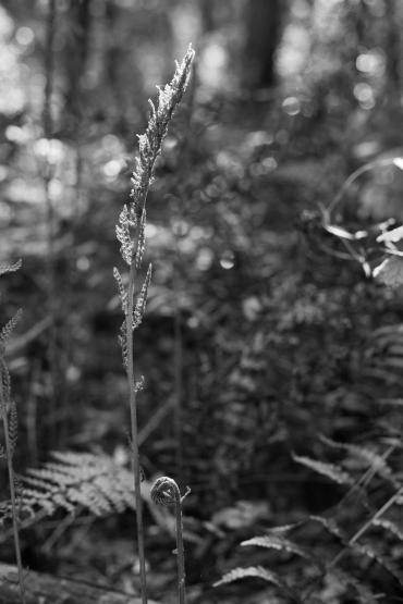 arboretum-30