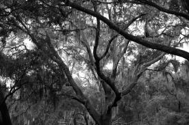 arboretum-31