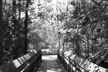 arboretum-4