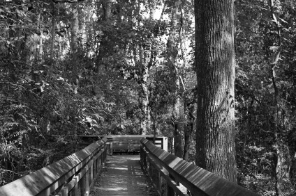 arboretum-5