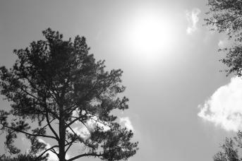 arboretum-6