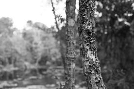 arboretum-8