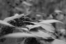 arboretum-9