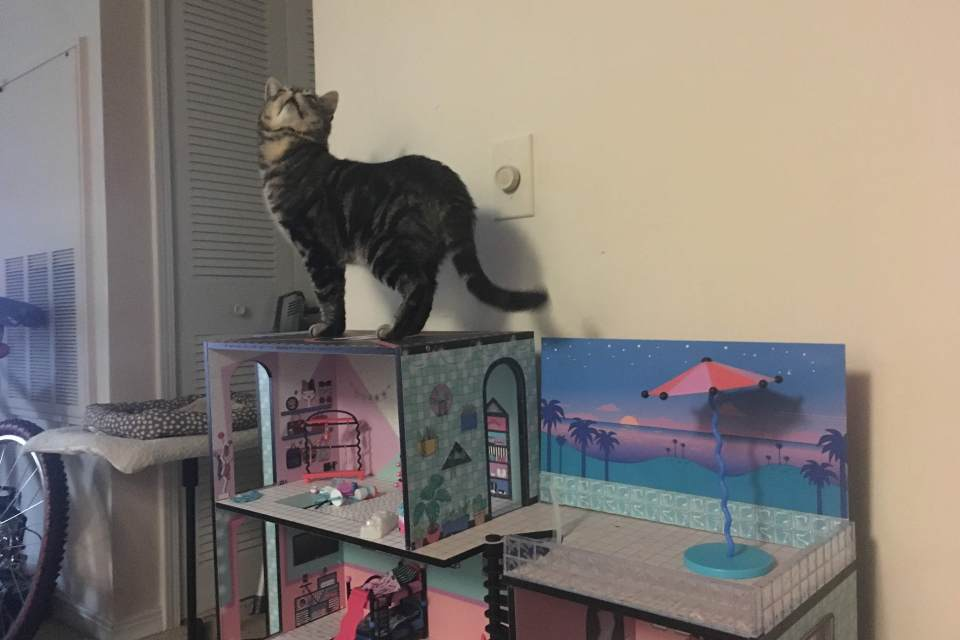 cat with LOL Surprise house