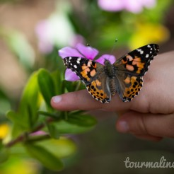 Painted Lady Monarch on child's finger