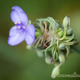 light purple flower