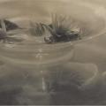 Adolph de Meyer, Water Lilies,1906