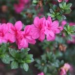 Tyler, TX Rose Garden-15
