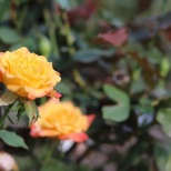 Tyler, TX Rose Garden-07