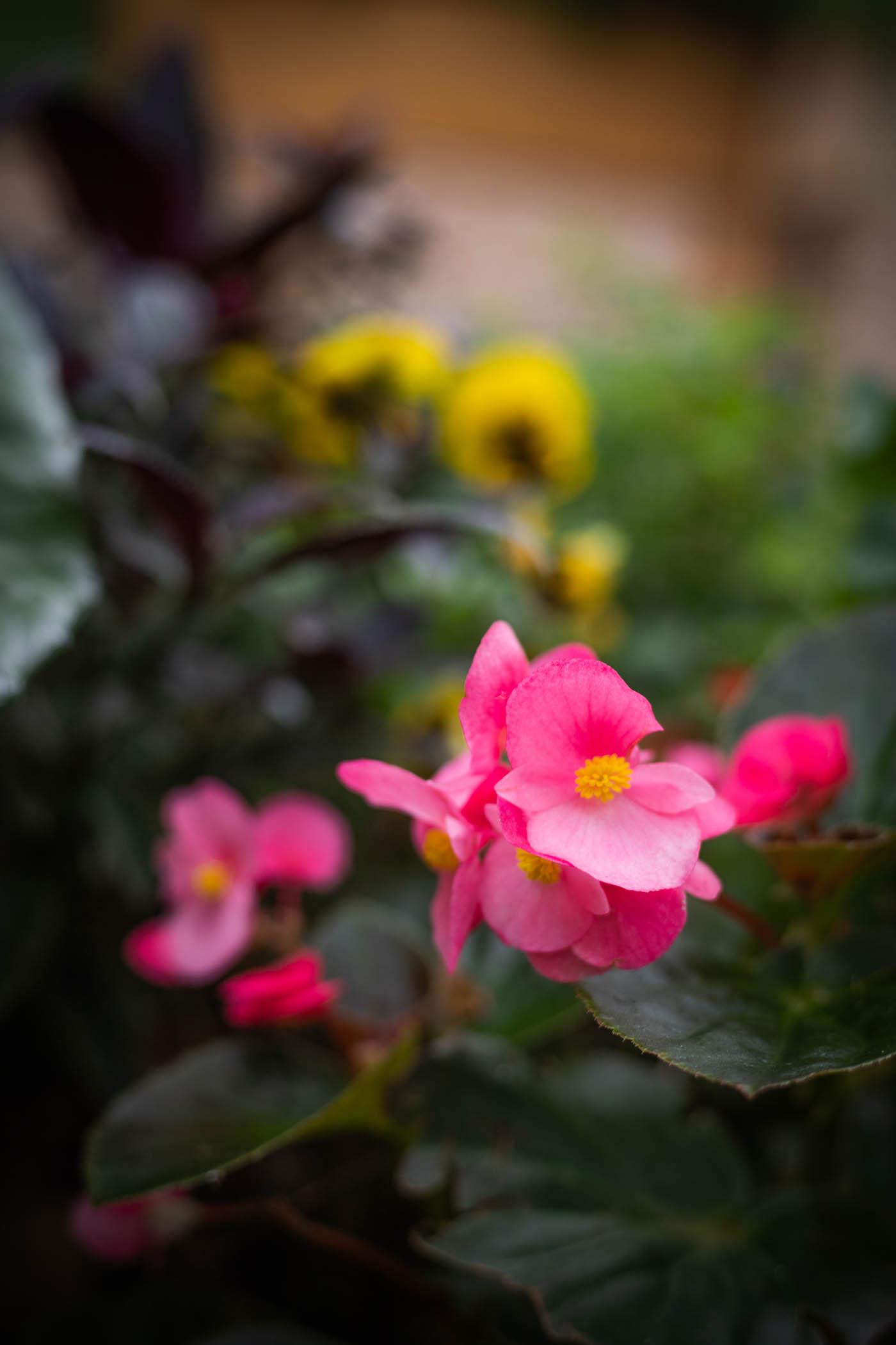 Arboretum Apr 24-10